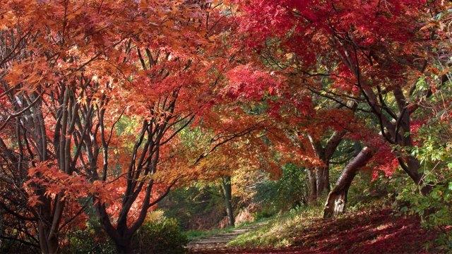 1431785910746-20161102-autumnacerpathway-carolsheppard