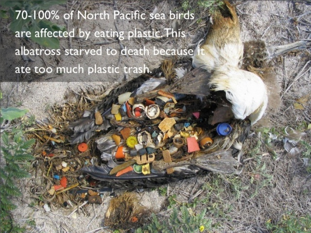 plastic-bottles-ocean-pollution-13-728